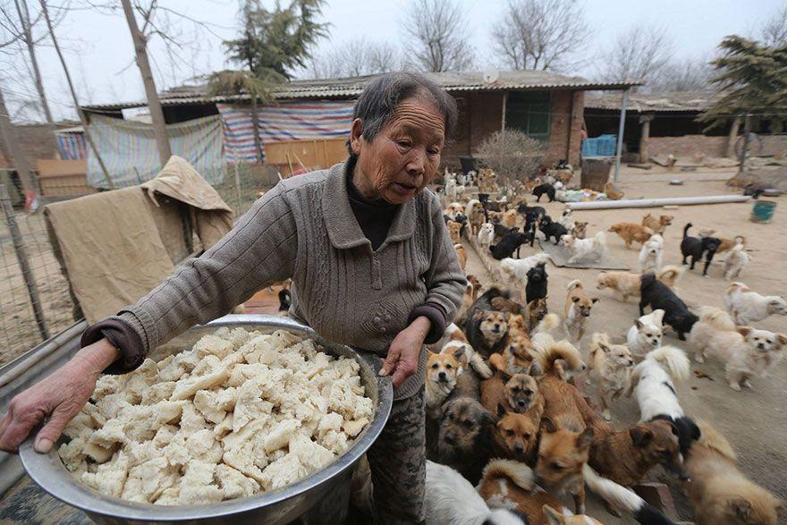 Wang Yanfang, la donna che cura 1300 cani randagi
