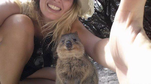 Quokka Selfie, il nuovo tormentone dall'Australia ai social network