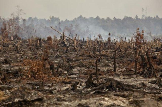 foresta distrutta indonesia