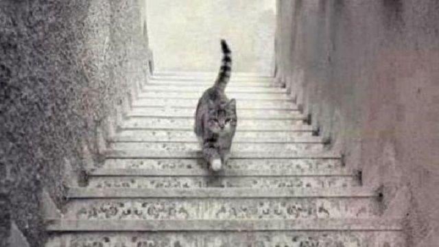 Questo gatto sale o scende le scale? Il nuovo dibattito sul web