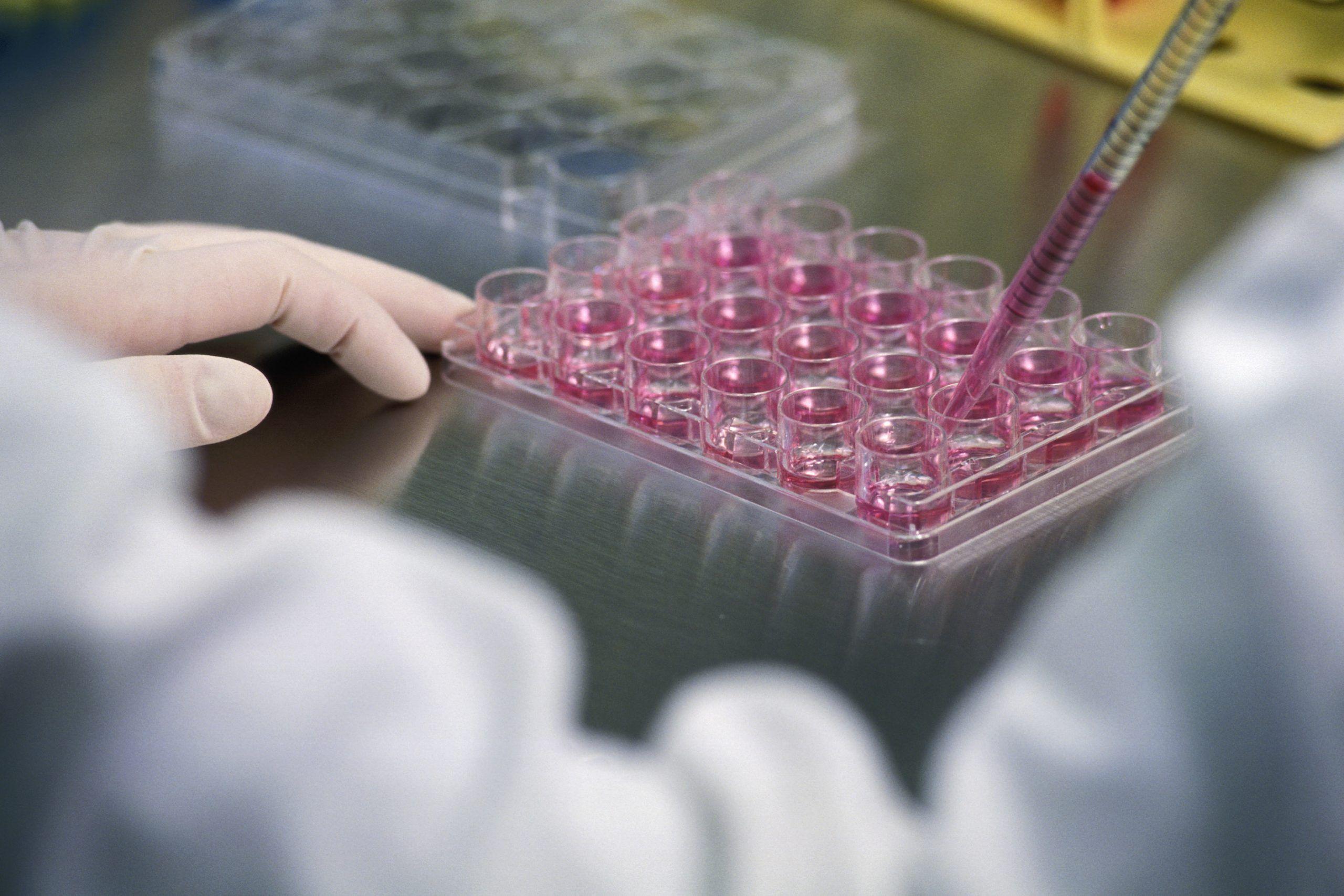 Legge 40: sì alla fecondazione assistita per coppie portatrici di patologie genetiche