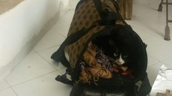 Lola: storia di una gattina che sbarca a Lampedusa