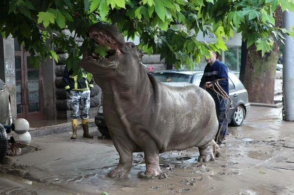 Georgia, Tbilisi alluvionata: 8 morti, lupi, ippopotami e leoni fuggiti dallo zoo