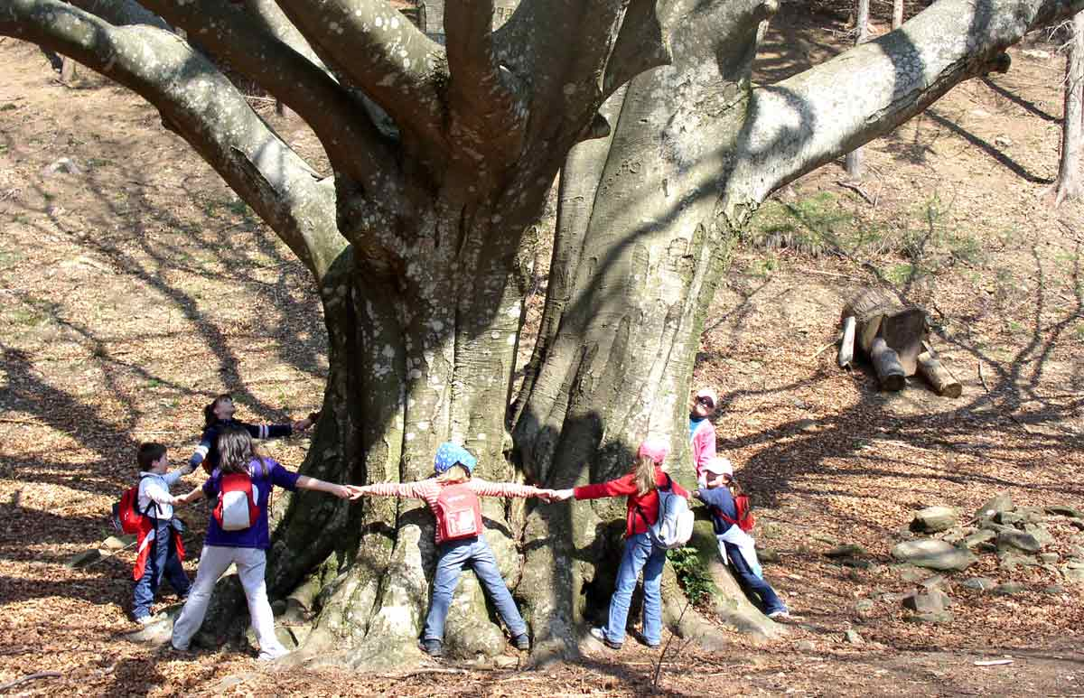 L'educazione ambientale diventa materia obbligatoria: nei programmi scolastici da settembre