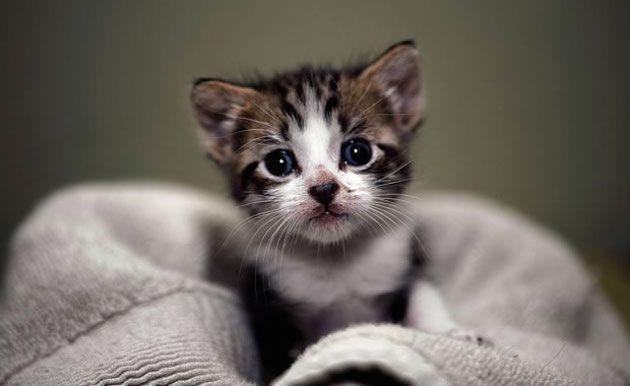 video di gattini salute 150x150