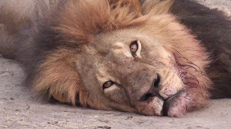 cecil leone zimbabwe
