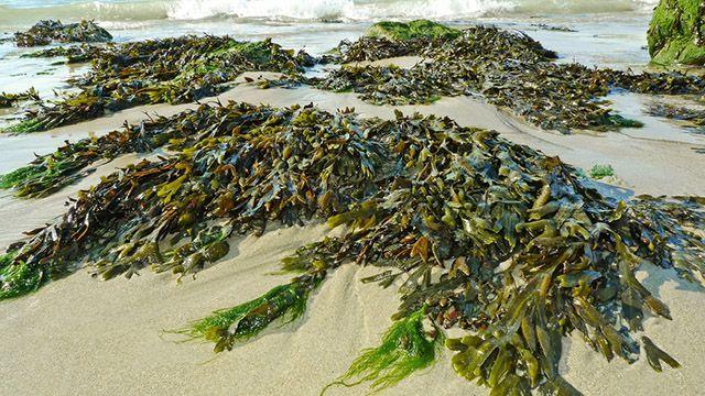 Combustibile che riduce i consumi: con le alghe si può