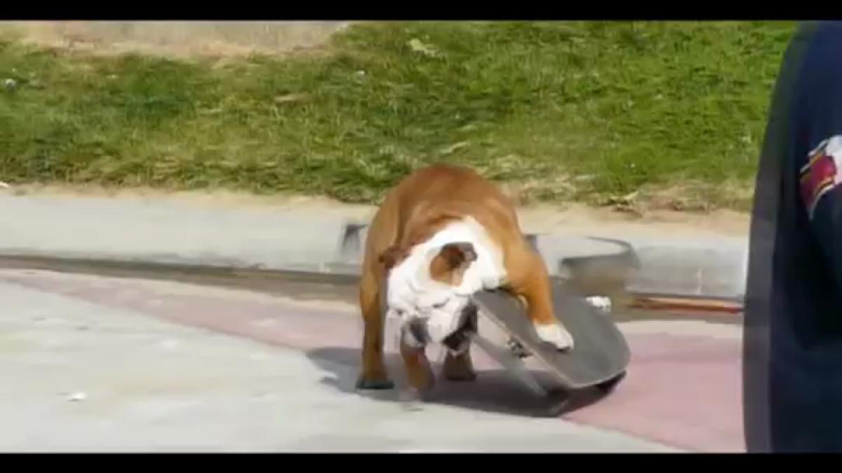 Morto Tillman cane skateboarder diventato famoso sul web
