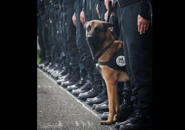 Cane poliziotto ucciso dall'Isis