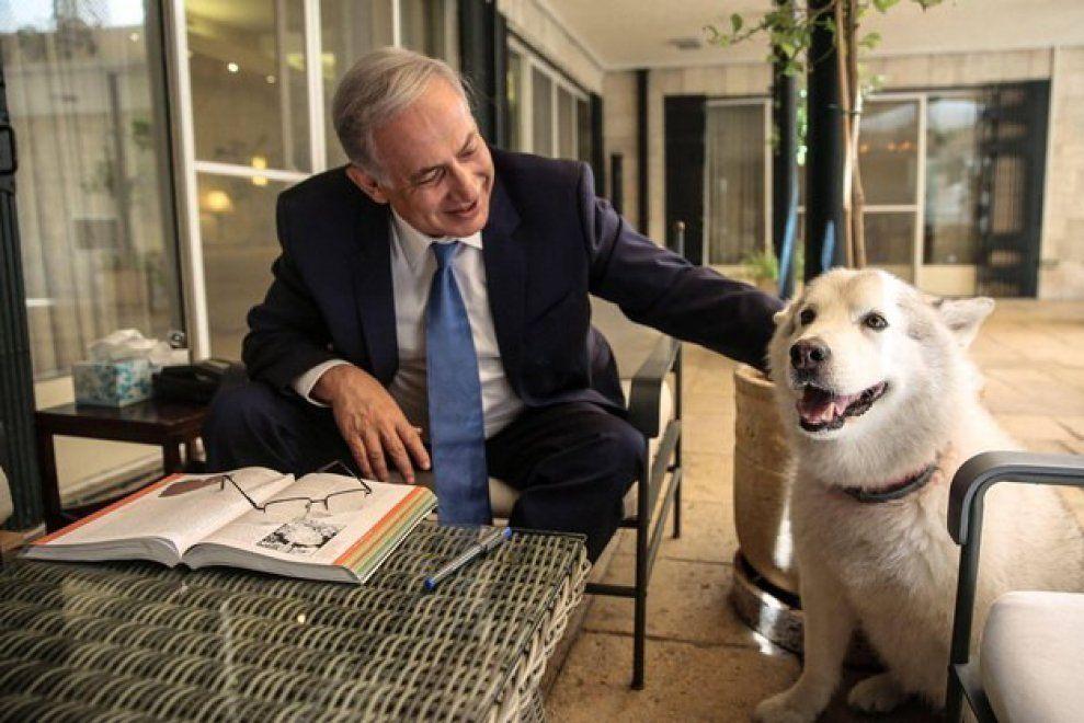 Cane di Netanyahu in quarantena
