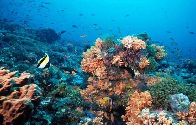 fondali marini pesci