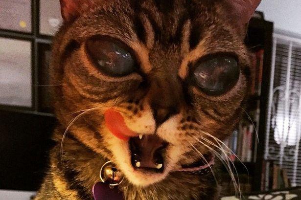 Matilda il gatto alieno