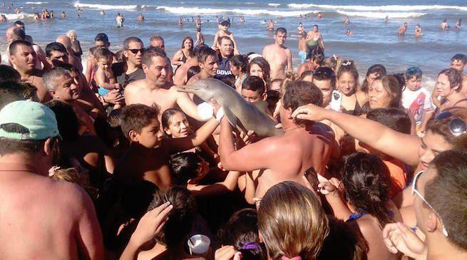 delfino morto selfie