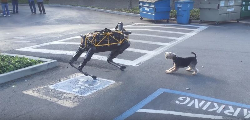 Cane vs cane robot