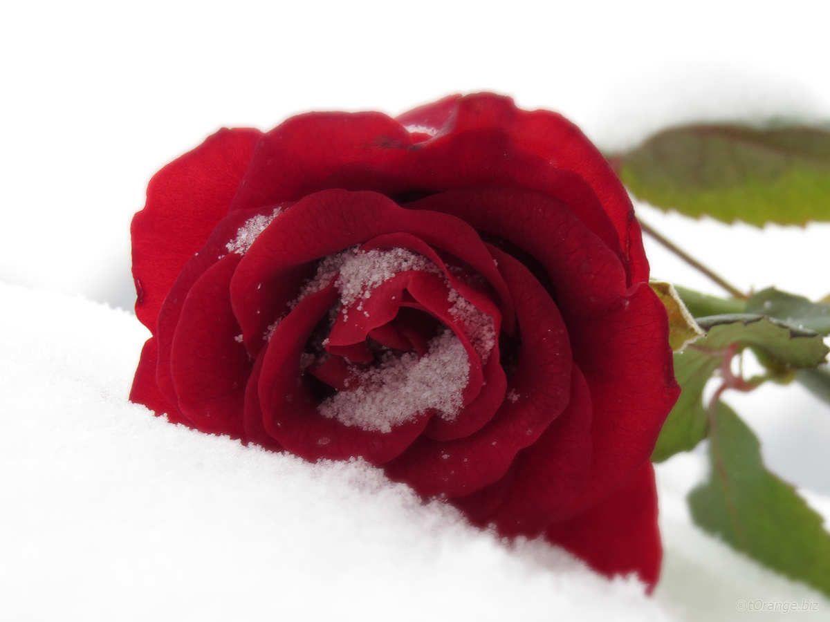 Fiori sulla neve per figlio morto