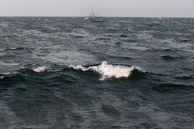 marea nera golfo messico