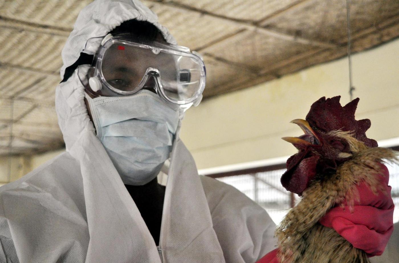 aviaria sintomi come si trasmette