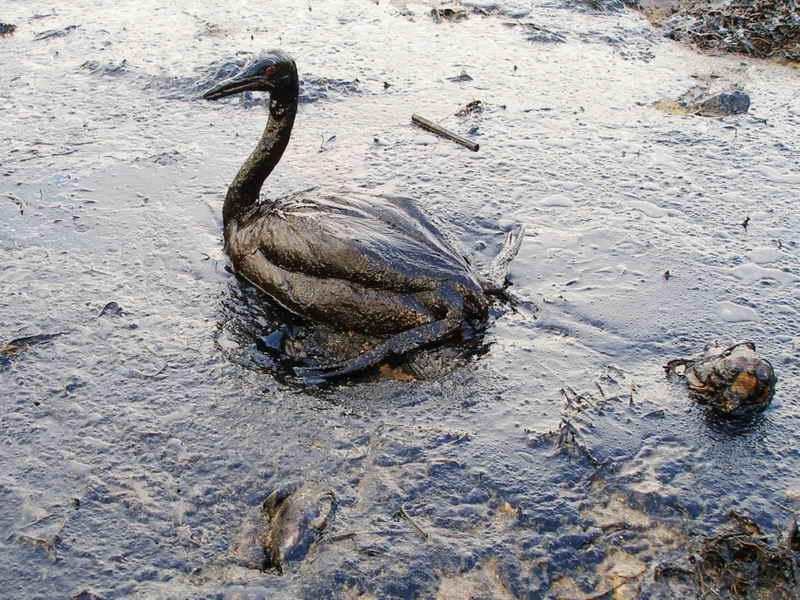 petrolio rischi ambiente