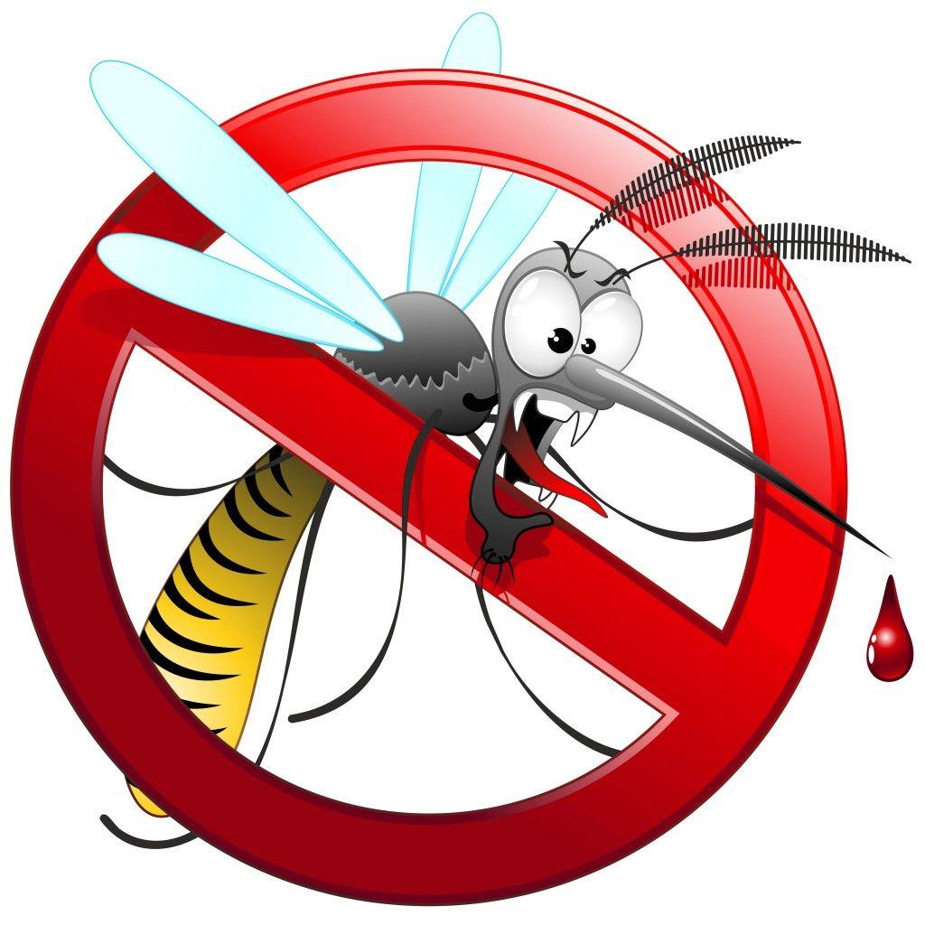 zanzara disegno