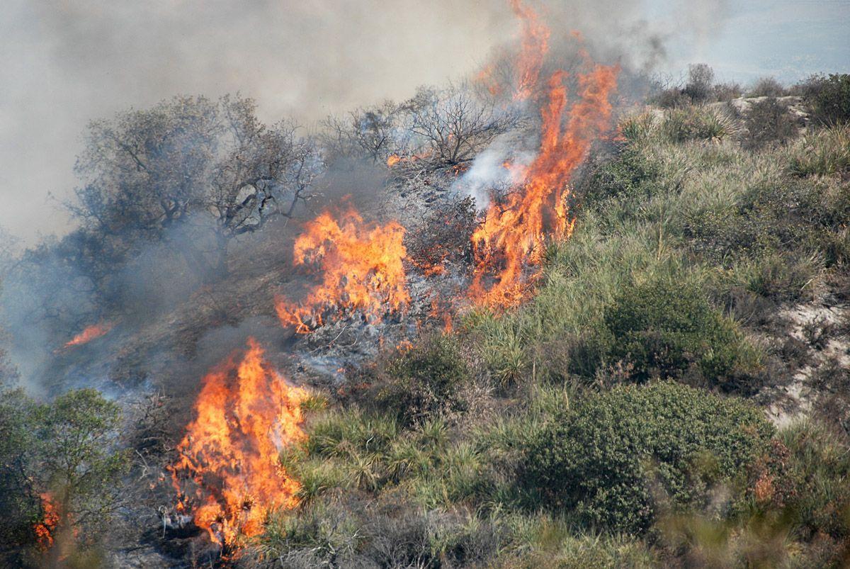 incendi boschivi palermo