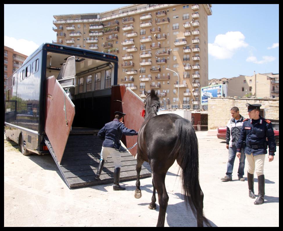 Sequestro di cavalli usati per corse clandestine