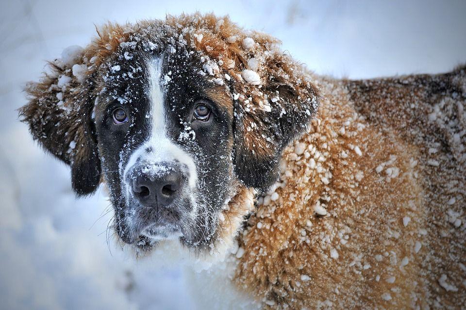 morte cani neve