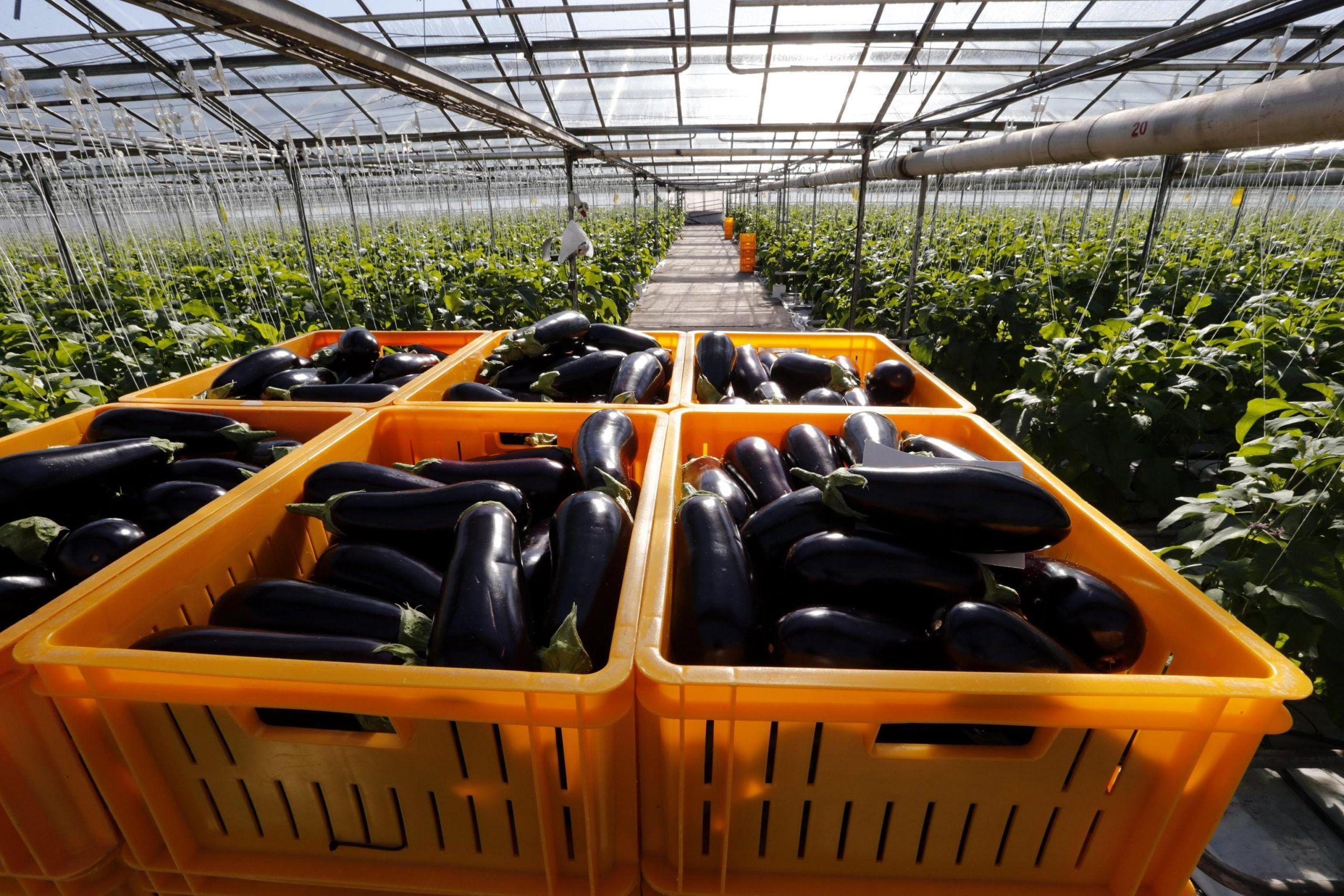 Bonus esonero agricoltura inps
