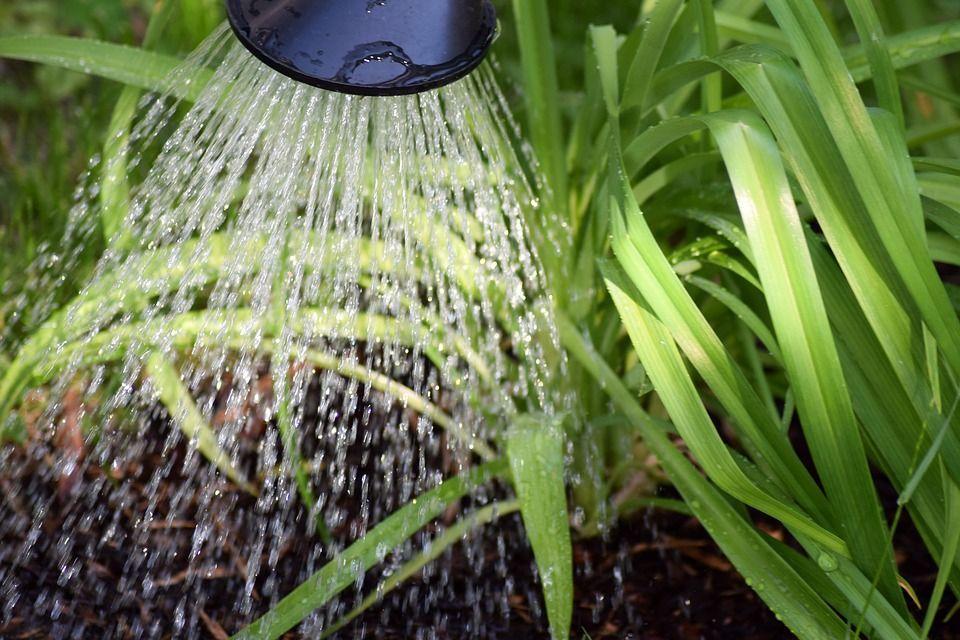 innaffiare piante estate
