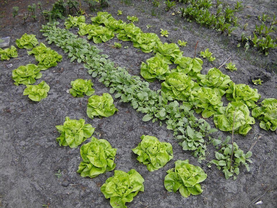 come realizzare orto