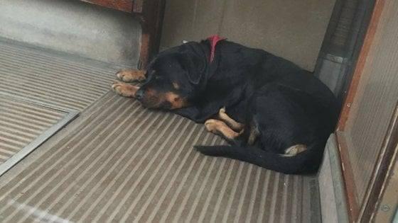 Cane abbandonato sul tram a Milano: salvato dai vigili