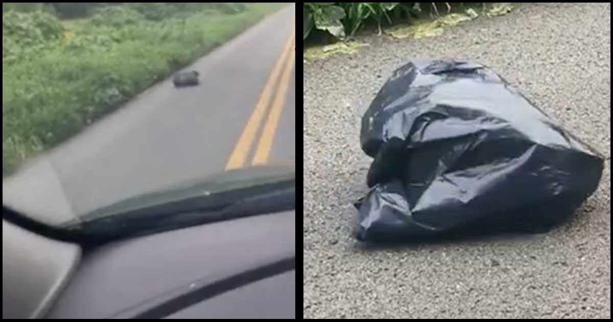 cucciolo di cane nel sacco spazzatura