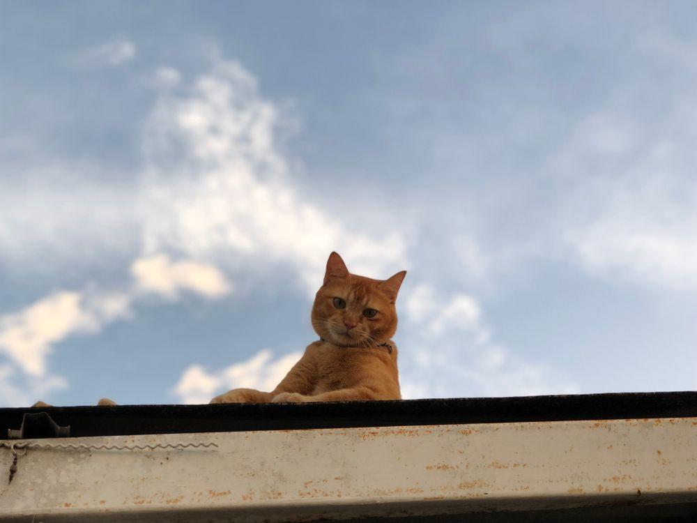 Tenny la gatta che aspetta fuori dall'ospedale