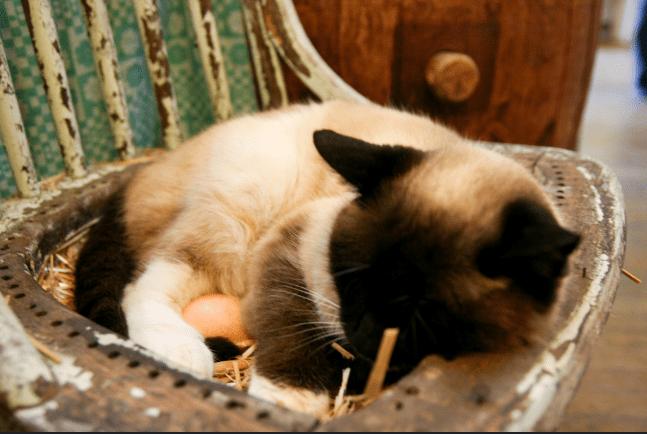 perché si dice gatta ci cova
