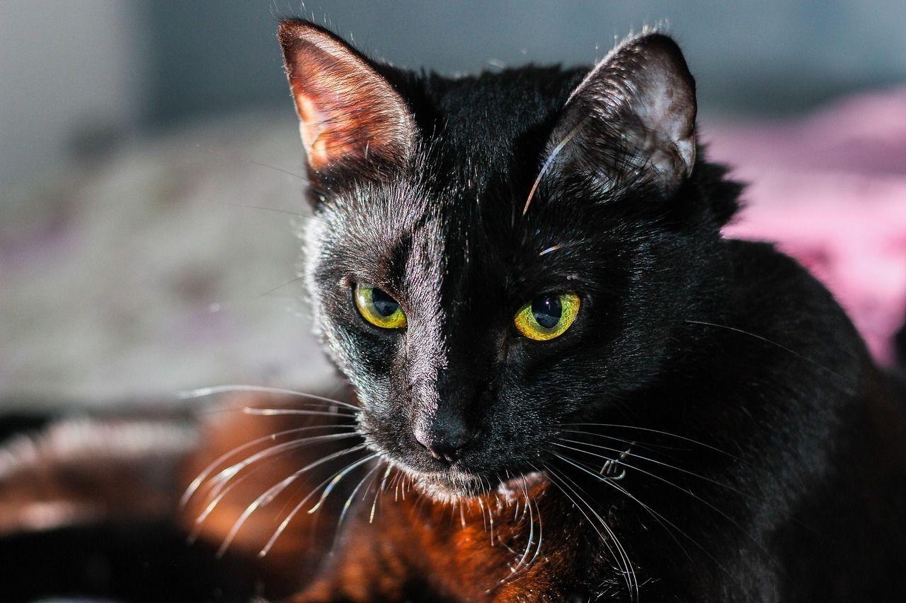 Nerone, il gatto nero che ha portato fortuna ai suoi padroni salvandoli dall'allagamento della casa