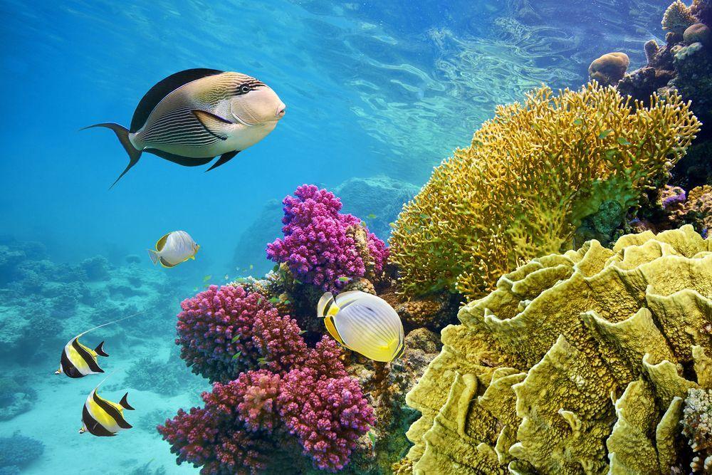 turismo illegale specie protette