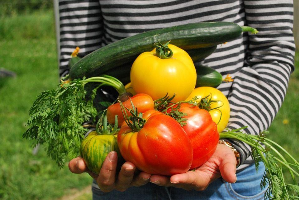 Coltivare il cibo