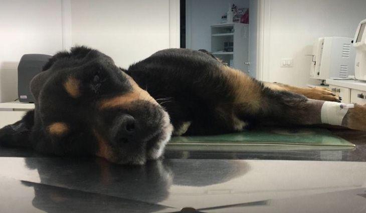 E' morto Rocky, il cane lasciato per giorni senza cibo né acqua su un terrazzo