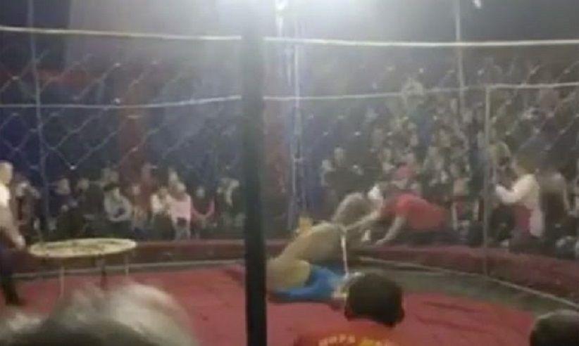 Paura al circo, il leone attacca la bambina nel pubblico