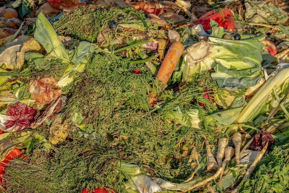 Spreco alimentare: serve cultura di recupero e valorizzazione del cibo