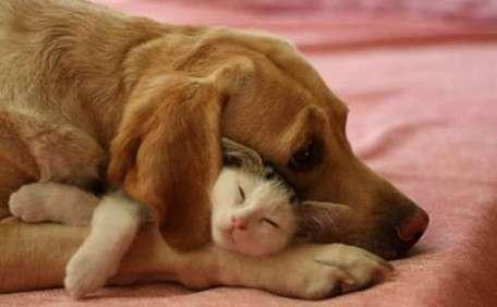 Cane e gatto tenerissimi