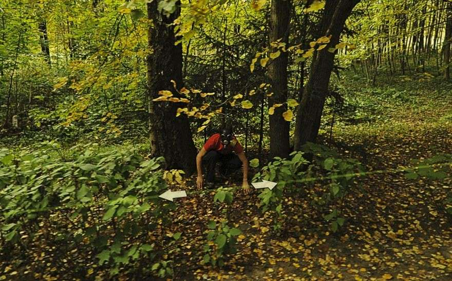Google Street View nel bosco