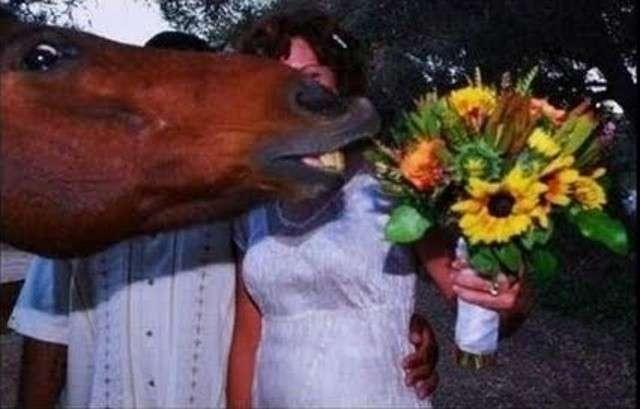 Cavallo amante dei fiori