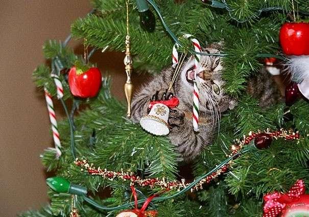 Animali che amano distruggere gli alberi di Natale