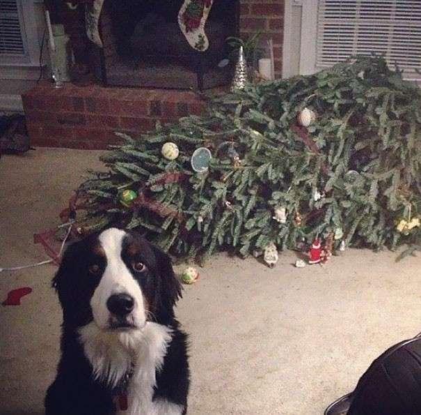 Animali che distruggono il Natale