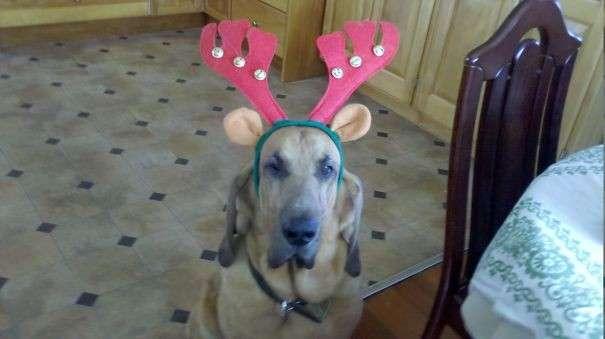Cane a Natale