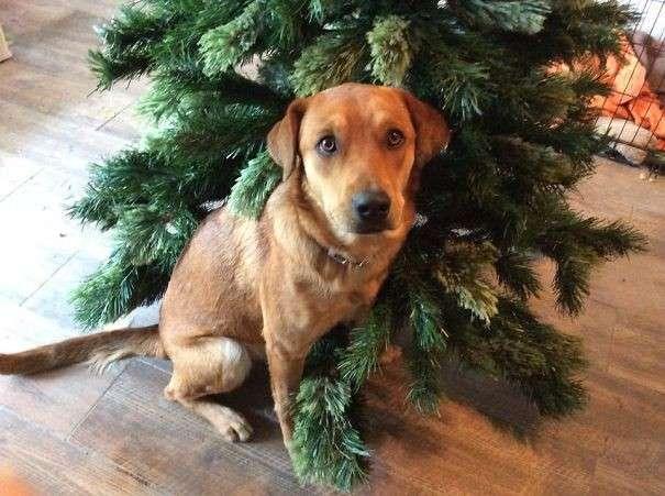 Cane alle prese con l'albero di Natale
