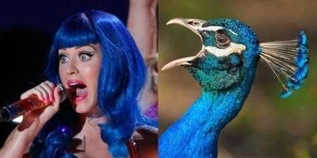 Katy Perry / Pavone