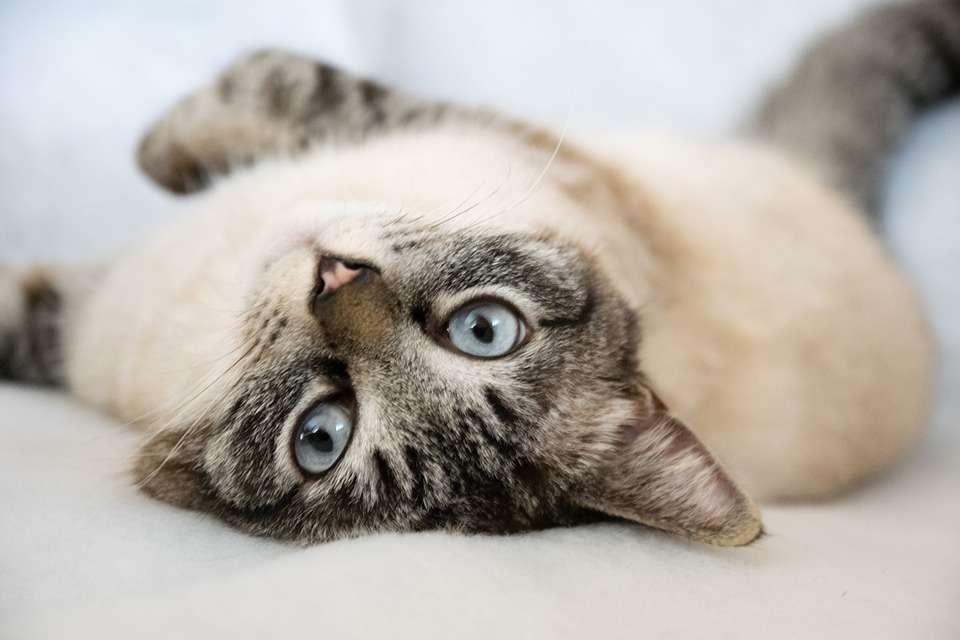 Buona domenica, immagini con gatti